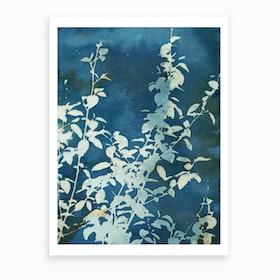 Evening Blooms Art Print
