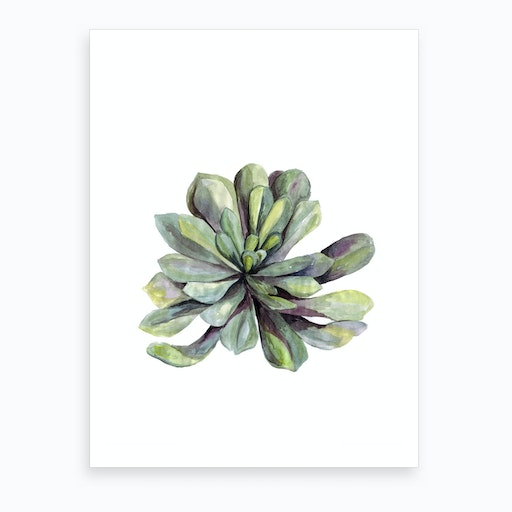 Botanical Illustration   Succulent Art Print
