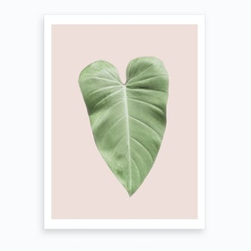 Blush Elephant Ear Art Print