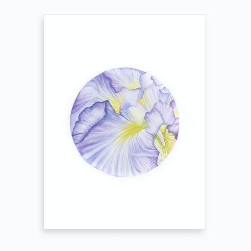 Iris Amethyst Flame Art Print