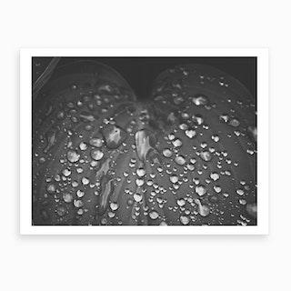 Wet Leave Black And White Art Print