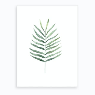 Botanical Illustration Fern Art Print