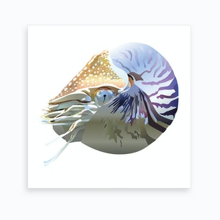 Nautilus 2 Art Print