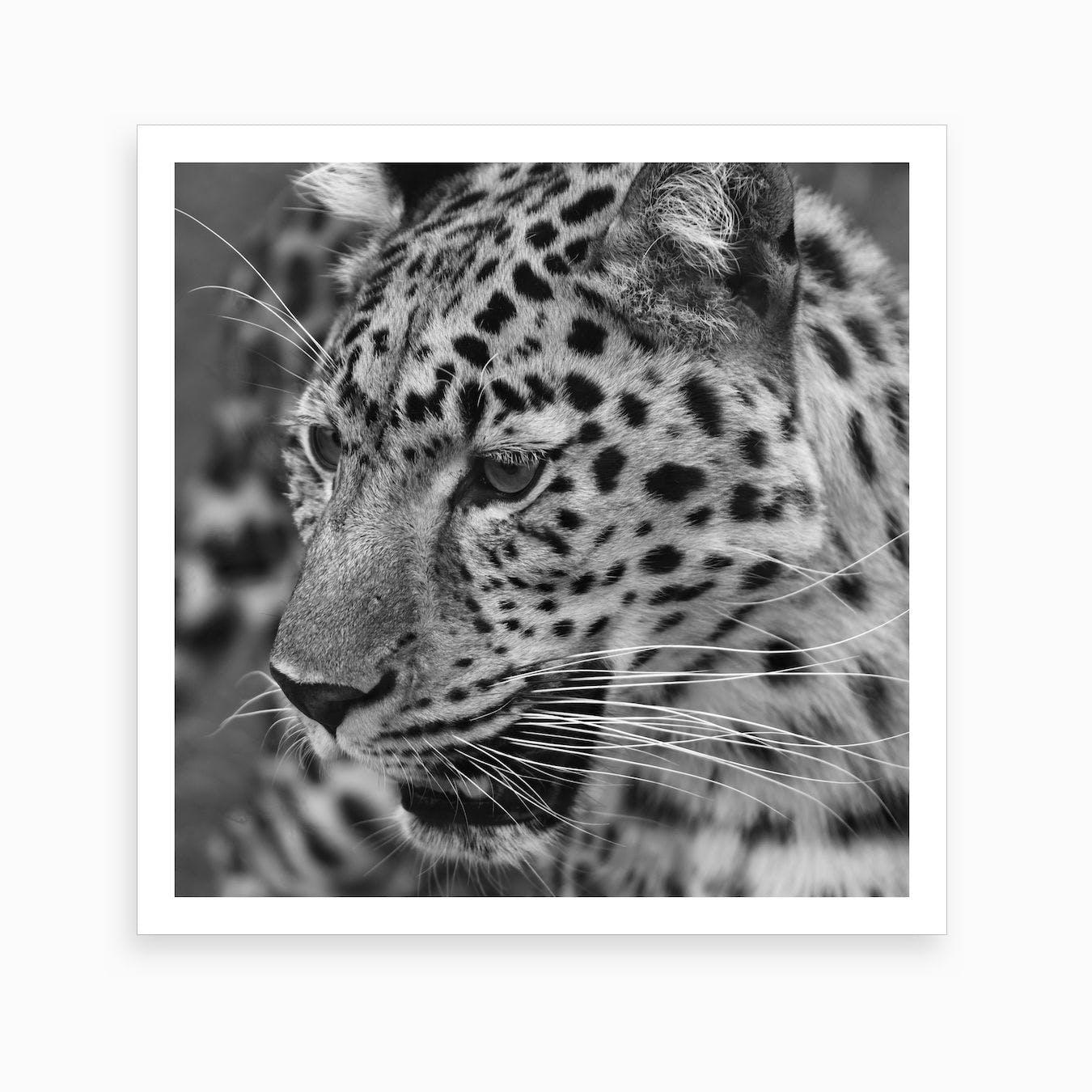 Leopard Square Art Print
