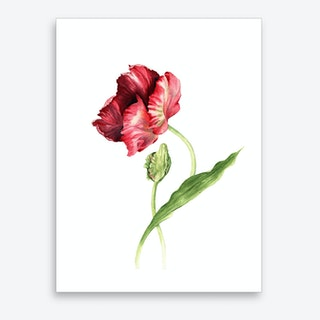 Tulpe Art Print