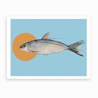 Curious Fish Art Print