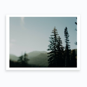 Trees And Sun Art Print