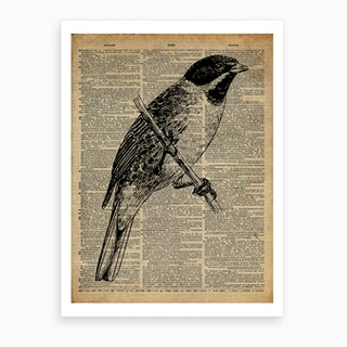 Jay Bird Art Print