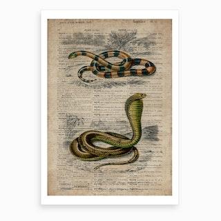 Snake Dictionnaire Universel D Histoire Naturelle Art Print