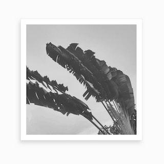 Grey Palms II Art Print