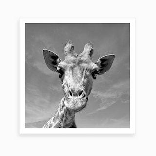 Giraffe Face Art Print