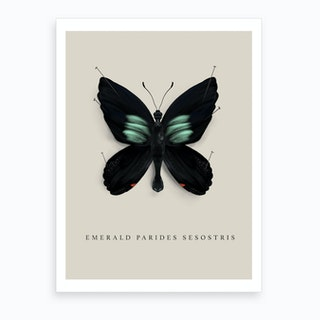 Butterfly No8 Art Print