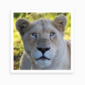 White Lion Female III Art Print