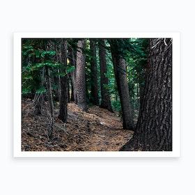 Yost Trail Art Print