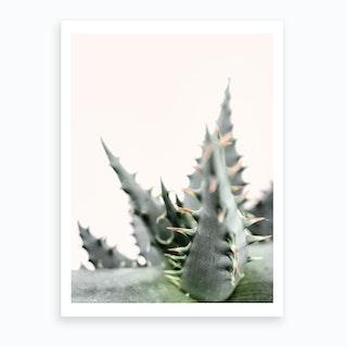 Succulent Plant Art Print