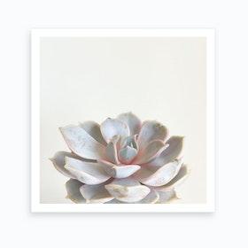 Succulent White Art Print