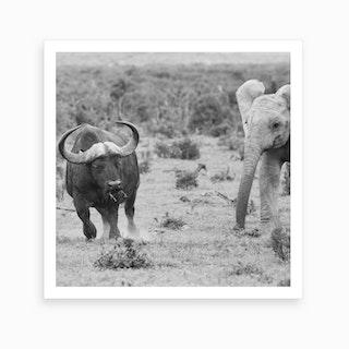 Elephant And Buffalo Art Print