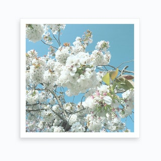 Blue, White Flowers Art Print
