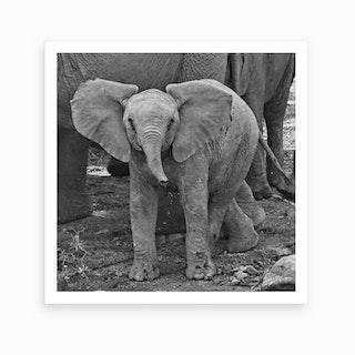 Baby Elephant Square Art Print