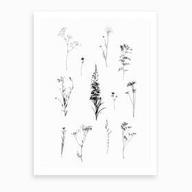 Botanical Bw Art Print