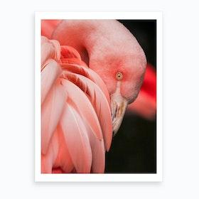 Pink Flamingo Close Up Photo Art Print