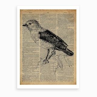 Babbler Bird Art Print