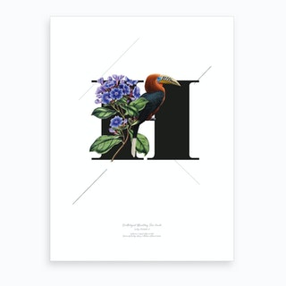 Botanical Alphabet H Art Print