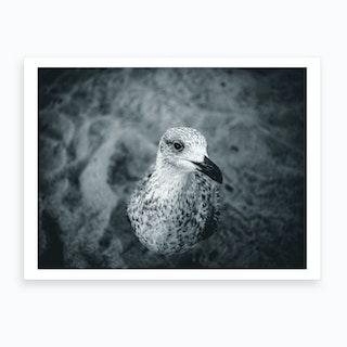 Seagull V Art Print