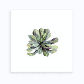 Botanical Illustration   Succulent Art Print