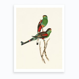 Tropical Parrots Couple Art Print