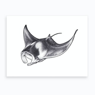 Giant Manta Ray Art Print
