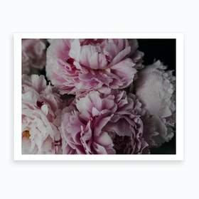 Wet Peonies Art Print