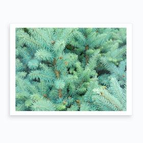 Thorns Of Fir Art Print
