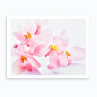Dusty Pink I Art Print