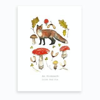 Irish Red Fox Art Print