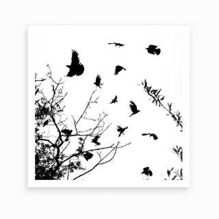 Black And White Crows Art Print
