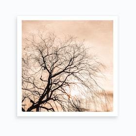 Sunset Tree Square Art Print
