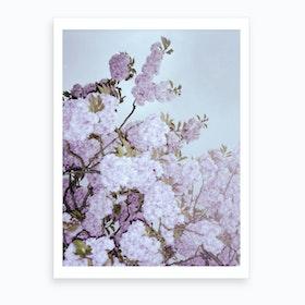 Cherry Cherry Blossom Art Print