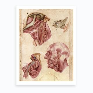 Vintage Anatomy Muscles Art Print