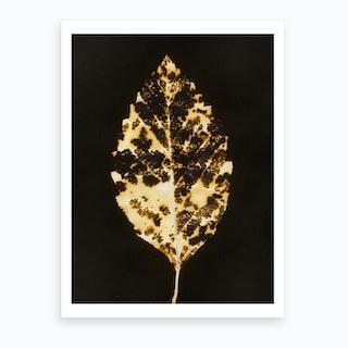 Gilded Leaf Art Print