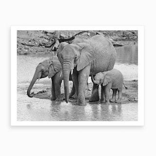 Elephants At The River Art Print
