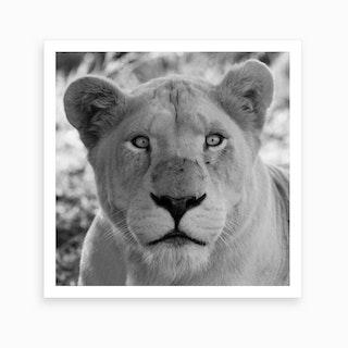 White Lion Female IV Art Print
