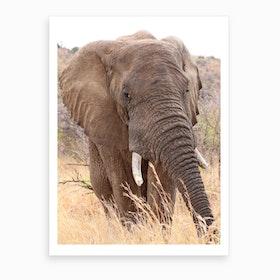 Elephant Portrait Color Art Print