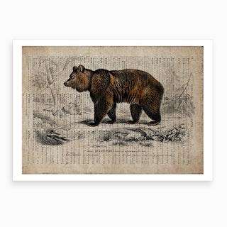 Bear Dictionnaire Universel D Histoire Naturelle Art Print