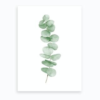 Eucalyptus Leaves Art Print