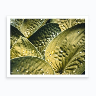 Wet Leaves Art Print