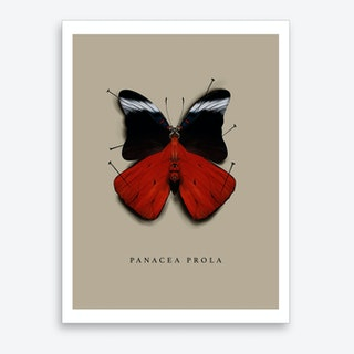 Butterfly No3 Art Print