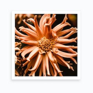 Chrysanths 2 Art Print
