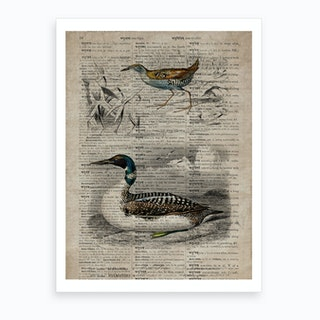 Baillons Crake And Duck Dictionnaire Universel Dhistoire Naturelle  Art Print