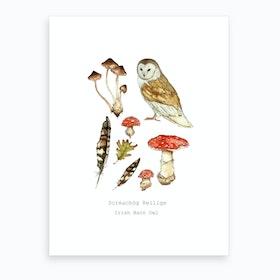 Irish Barn Owl Art Print